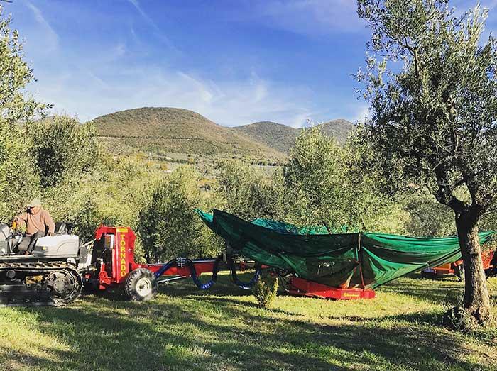 Scuotitore a ombrello per raccolta meccanica delle olive - Al Vecchio Frantoio Bartolomei