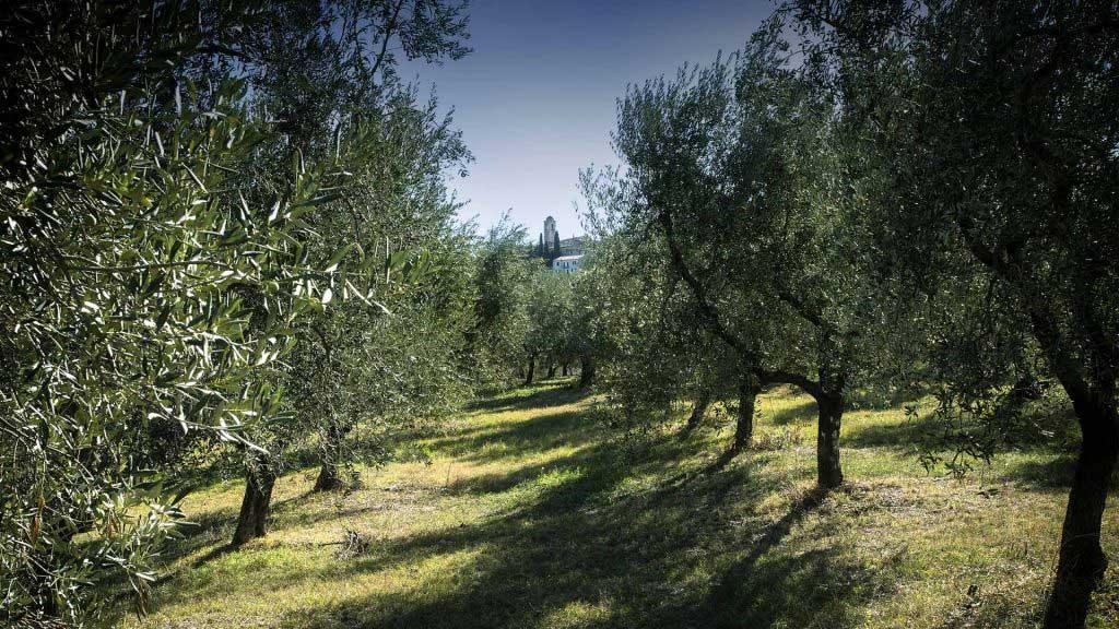 cover-oliveto-bartolomei-montecchio